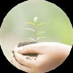 Promocion de siembra de árboles y reciclaje